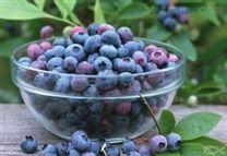 蓝莓提取物10:1  蓝莓粉 包邮