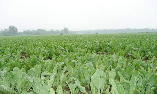 助力农业产业结构调整